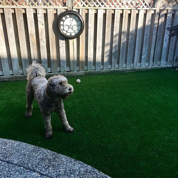 Dog turf